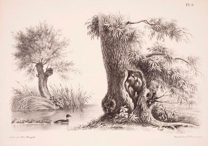 Magnus von Wright, Crack Willows on the Waterfront, from Samling af Etuder för Landskaps, Djur och Blomstertecknare, 1839–40, lithograph, 25cm x 32cm Finnish National Gallery / Ateneum Art Museum Photo: Finnish National Gallery / Tero Suvilammi
